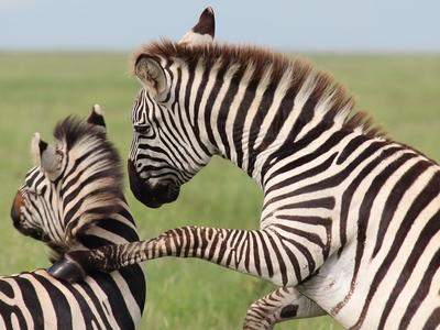Safari Ventures And Bravo Safaris