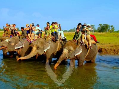 Elephant Bathing - Chitwan National Park