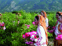 Bulgaria - Valley Of Roses