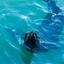 Cape Town Seals