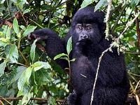Gorilla Trekking in Rwanda 4 Days