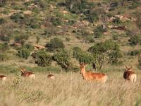 3days/2nights Camping Tsavo West
