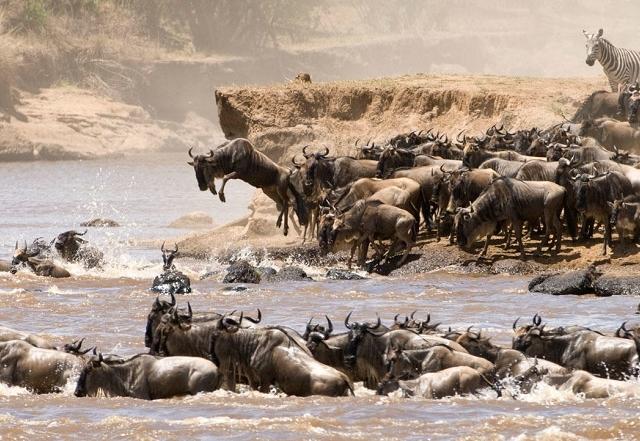4 Days Tanzania Safari Big Five Photos