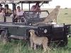 4X4 - Cheetahs