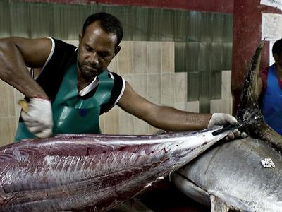 Fisherman Working In Fish Market Malce City Maldives