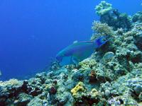 Day Excursion To Aqua Parks City In Sharm El Sheikh