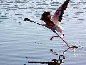 Nature and Birding Safari Photos