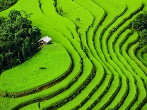 Vietnam Travel Leads