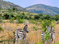 Pilanesberg Nature Reserve Safari and Sun-City Day Trip