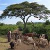 Acacia Tree - Arba Minch - Ethiopia