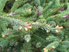 Acadia National Park Vegetation - Maine