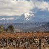 Aconcagua Volcano & Vineyard