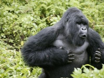 Africa Nature Trekkers - Kampala