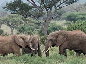 Arusha Town To Lake Manyara National Park Photos