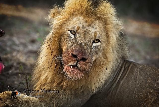 Pilanesberg Full Day Safari Tour Photos