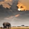Afrikan Sunset With Elephants