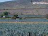 Agave Fields Hill