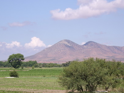 Agriculture In Fresnillo