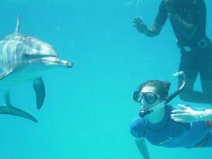 Akaroa Shore Excursion: Swim with Dolphins in Akaroa Harbour Photos