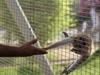 Al  Ain  Zoo  Baby  Monkey