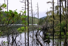 A Lake In Pudacuo National Park