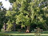 Albury Botanical Gardens