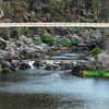 Bridge At Cataract Gorge's First Basin
