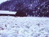 Allegheny  River  Ice  Jam
