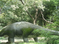 Allen Forest Zoo