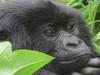 Almader Tours & Travel - Kampala