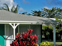 Hibiscus Aloha