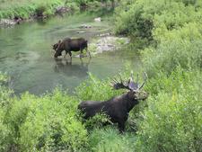 Along Cascade Canyon Trail - Grand Tetons - Wyoming - USA
