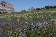 Along Marion Lake Trail- Grand Tetons - Wyoming - USA