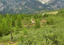 Along Taggart Lake & Beaver Creek Trail - Grand Tetons - Wyoming - USA
