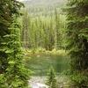 Alpine Creek In Mission Mountains MT