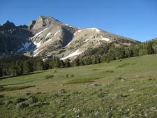 Alpine Meadow Near Wheeler Peak