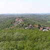 También-Forest