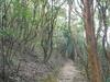 Amah Rock Trail View