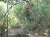 Amah Rock Trail
