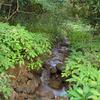 Amboli Small Stream