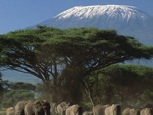 Kenya Out of Africa Safari Tour Fotos