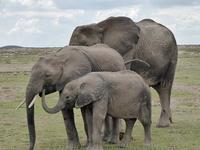 5 Days Maasai mara, Amboseli, Nakuru and Naivasha safari