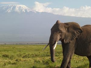 Camping In Amboseli National Park