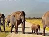 5 Days 4 Nights Amboseli,Lake Naivasha, Masai Mara