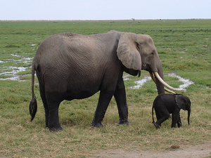 Mt. Kilimanjaro finest- Amboseli National park Photos