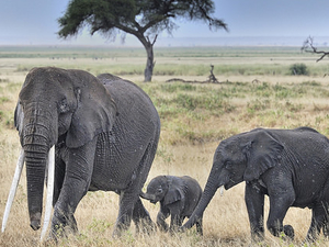 6 Days Amboseli Nakuru Masai Mara Wildlife Camping Tour Photos