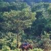 Amchang Santuario de Vida Silvestre