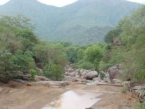 Amirthi Floresta