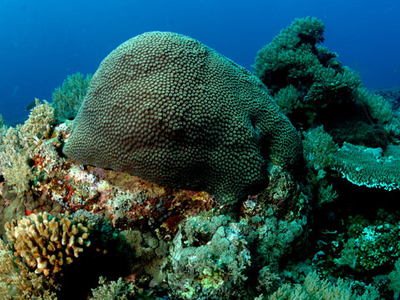 Anambas Islands