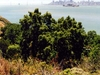 San Francisco Skyline From Angel Island